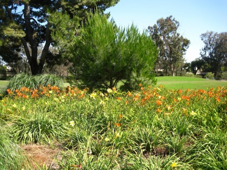 The flowers make playing golf beautiful