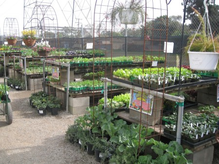 When the garden was pretty well cleared, we headed to the nursery